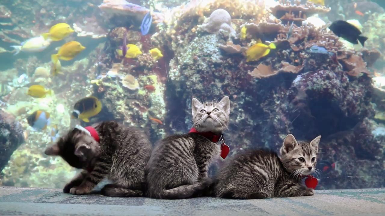 新形コロナで休館の米ジョージア水族館 子猫が「探索」